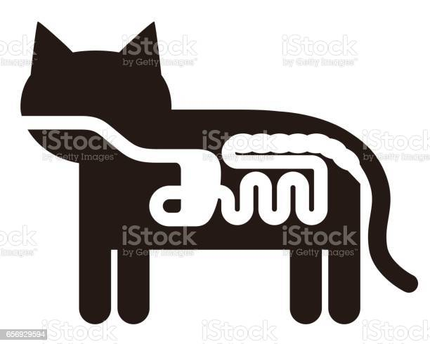 Cats digestive organ anatomy pictogram vector illustration vector id656929594?b=1&k=6&m=656929594&s=612x612&h=apb5qaj576cfncs9ppgg5se zfcw1ndbf36r0qrinnu=