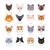 Vector illustration of  different cats breeds, including havana brown, sphynx, British Shorthair, Siamese, Maine Coon, Oriental, Persian, Bengal, Abyssinian, isolated on white.