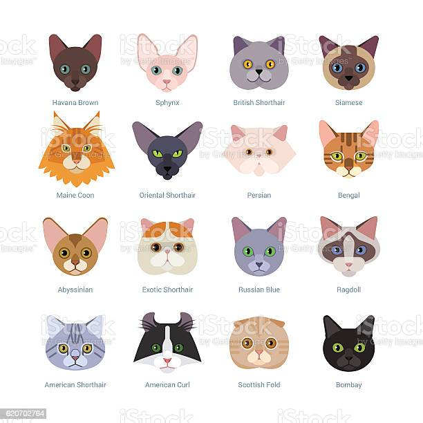 Cats faces collection vector id620702764?b=1&k=6&m=620702764&s=612x612&h=xb3i5at9czzswg9sqxz4m52rltfpxwabpdjvb21a oy=