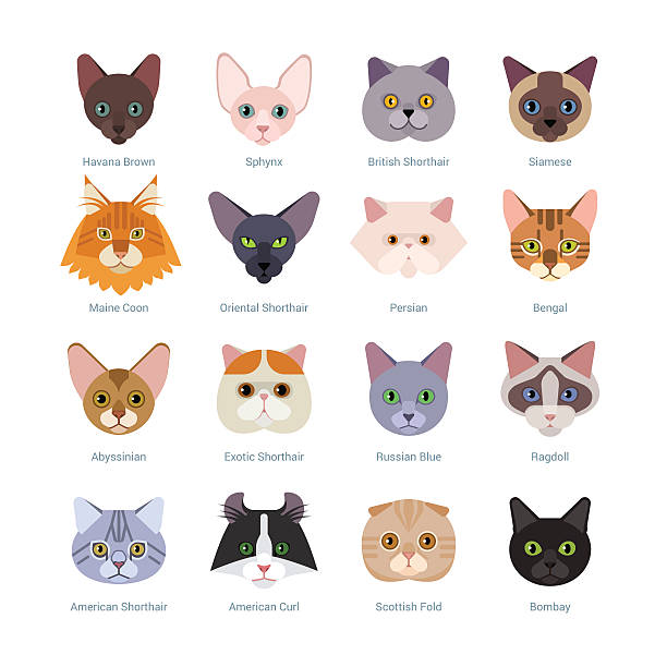 cats faces collection - cat stock illustrations, clip art, cartoons, & icons