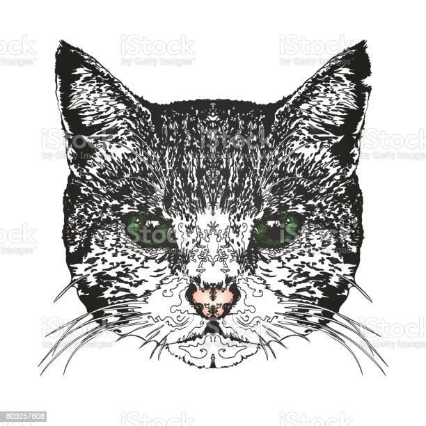 Cats head vector id803257808?b=1&k=6&m=803257808&s=612x612&h=5qfztfns5hlvxydb9r llryg8wgya7zemu kvlycm8a=