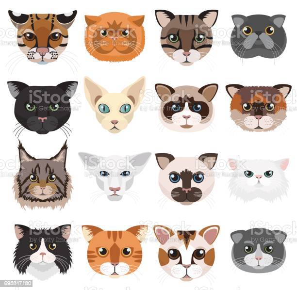 Cats heads icons emoticons vector set vector id695847180?b=1&k=6&m=695847180&s=612x612&h=6i7irr69zfg3rk sw7q693tyx9tqf67j0b3ffe2hdpm=