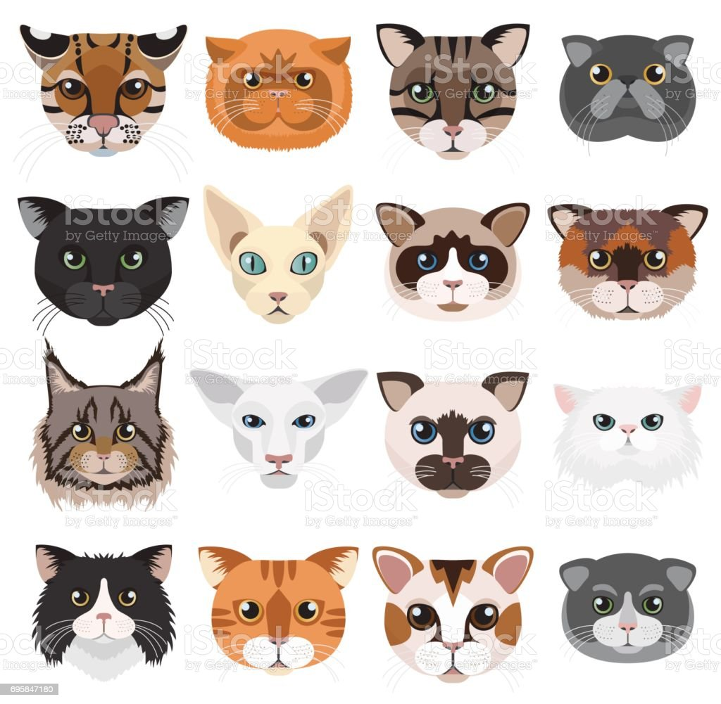 Cats heads icons emoticons vector set. vector art illustration