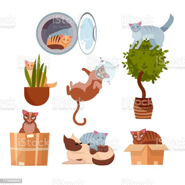 Cats in funny places in a box in a washing machine on a room flower vector id1176308437?b=1&k=6&m=1176308437&s=612x612&h=froeyc9ja39lpdflmrzgts2jx8jhny7h6y mli4 1q8=