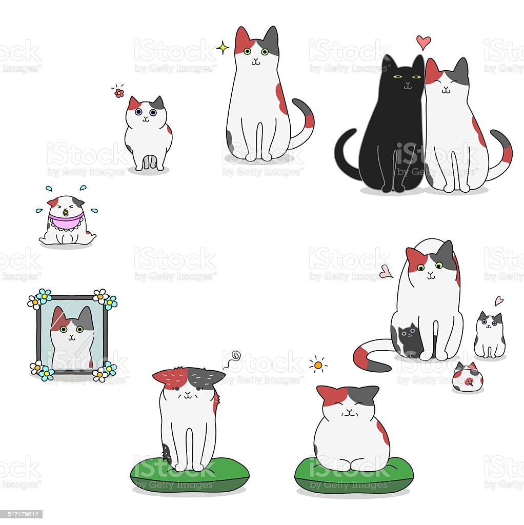cat's life cycle vector art illustration