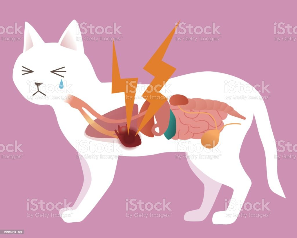 Cats Organ And Heart Disease Vector Illustration Stock Vector Art ...