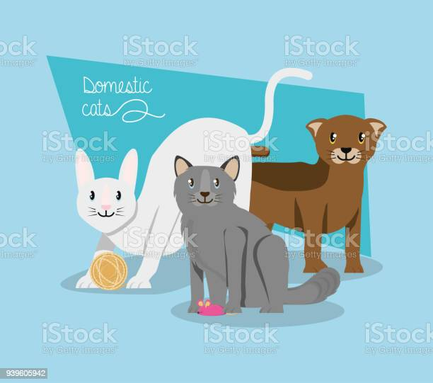 Cats playing with mouse vector id939605942?b=1&k=6&m=939605942&s=612x612&h=j9lcndkikvtiued8z hbiame182l48b3ywzfdte3vsc=