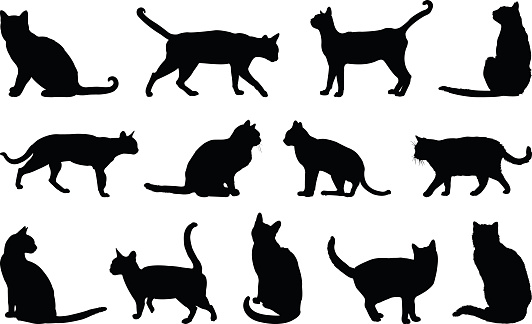 Cats silhouette