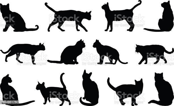 Cats silhouette vector id854951280?b=1&k=6&m=854951280&s=612x612&h=n2pqtgz 04vvik vclrhdki9ubqkzgl4uc1rf sbvok=