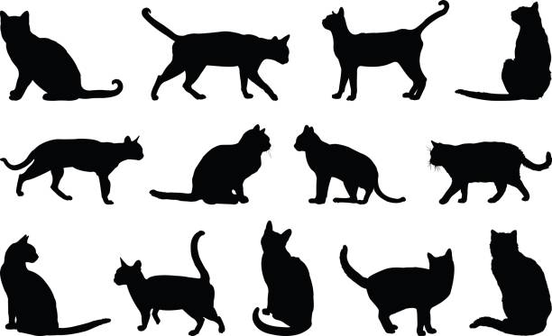 cats silhouette - cat stock illustrations, clip art, cartoons, & icons