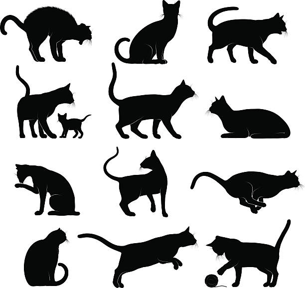 cats silhouettes - cat stock illustrations, clip art, cartoons, & icons