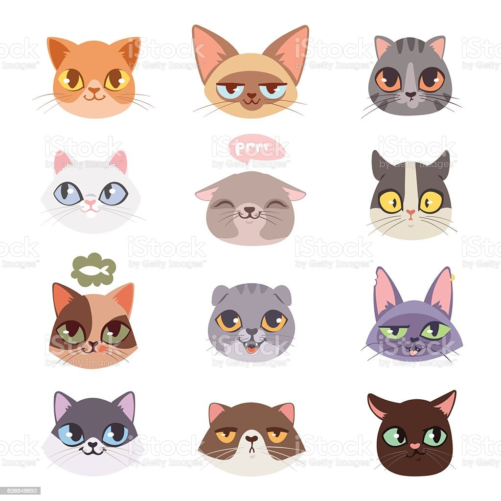 Cats vector heads illustration vector art illustration