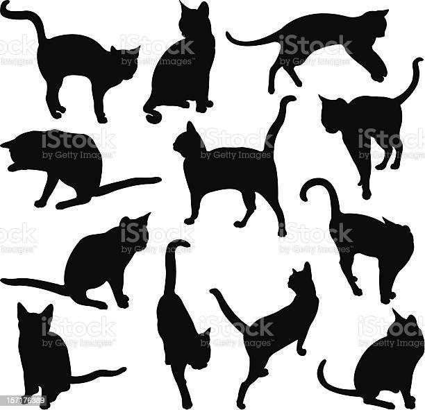 Cats vector id157176389?b=1&k=6&m=157176389&s=612x612&h=zyyfwqofi396acvg kgl oukjdwsdjshuigmv8etsci=