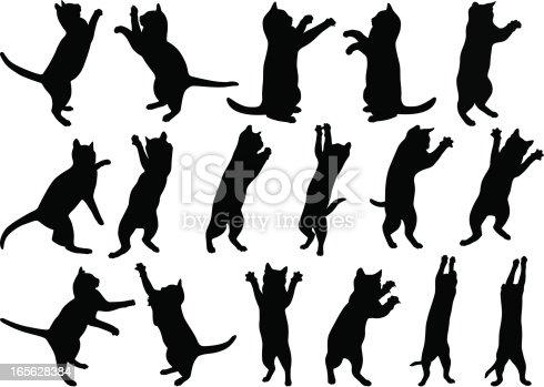 istock Cats 165628384