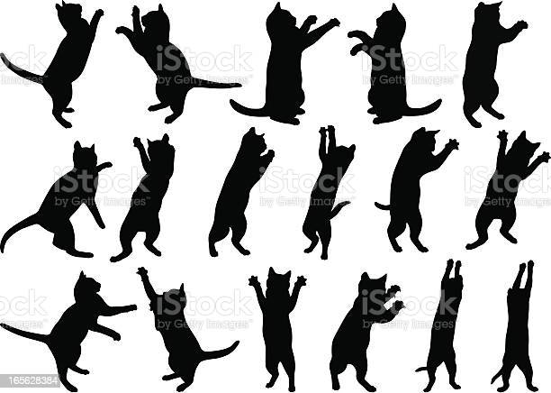 Free cat stretching Images, Pictures, and Royalty-Free