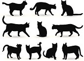vector file of cats