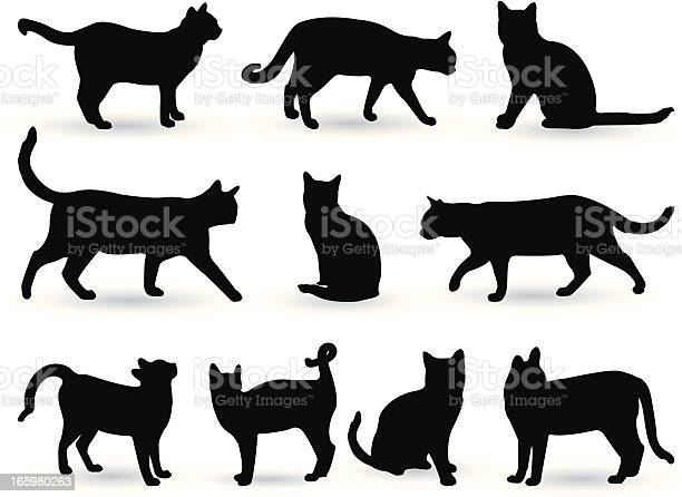 Cats vector id165980263?b=1&k=6&m=165980263&s=612x612&h=fyptaou9smgn3mslbh6zxs8nwyx7yb9dooerdjg2qdy=