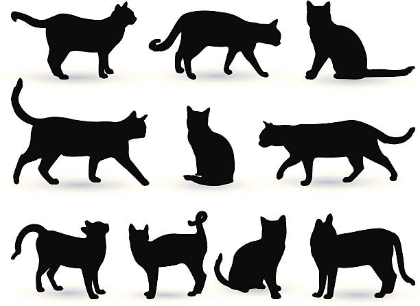 cats - cat stock illustrations, clip art, cartoons, & icons