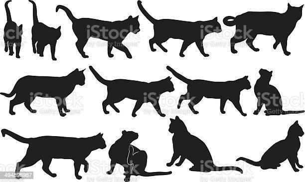 Cats vector id494896987?b=1&k=6&m=494896987&s=612x612&h=upphi3e4vate9me517difjq 80nmvty0klu6ium9sf0=