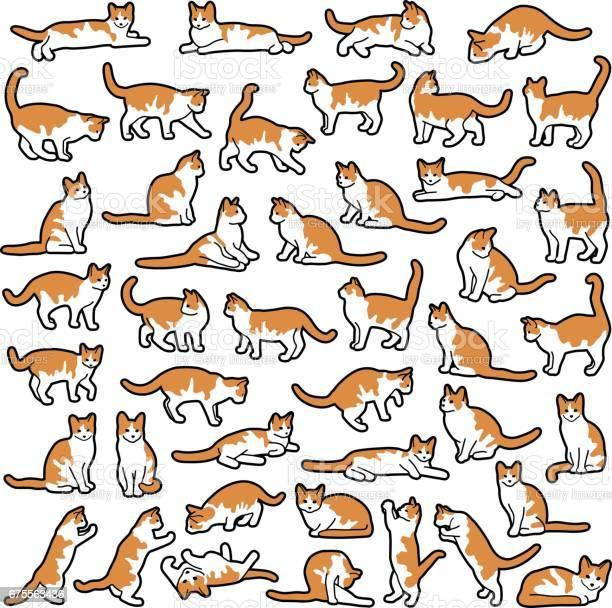 Cats vector id675563436?b=1&k=6&m=675563436&s=612x612&h=gkph0knlpc o 2oduqty2inyn1nr3tkypymtvzqbug8=