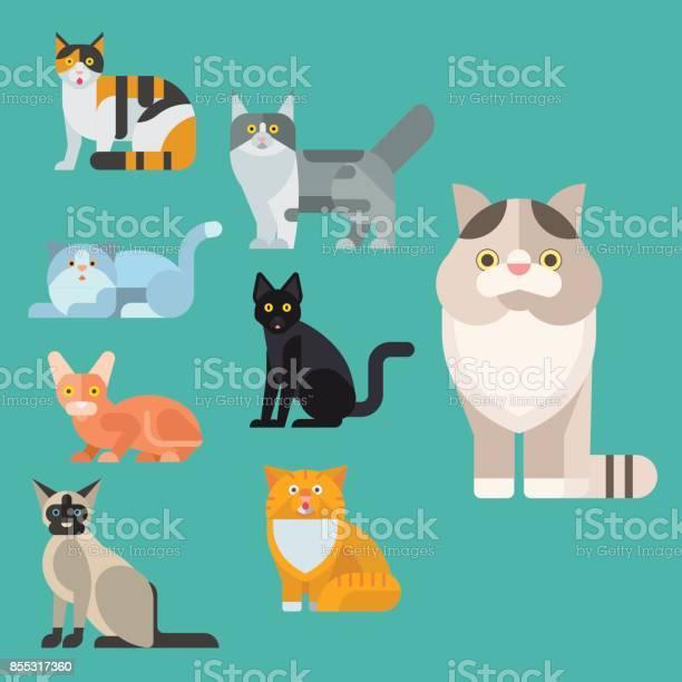 Cats vector illustration cute animal funny decorative kitty feline vector id855317360?b=1&k=6&m=855317360&s=612x612&h=tpfkjoenmmstj36mijgritfnoj5kjdr 9uvumd51h3q=