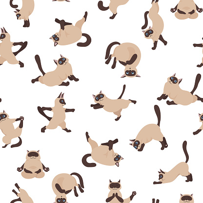Cats yoga seamless pattern. Siamese cats. Different yoga poses and exercises
