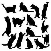 cats_set