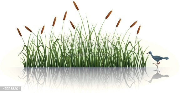 Cattail with Reflection. High Resolution JPG,CS5 AI and Illustrator 0.8 EPS included.