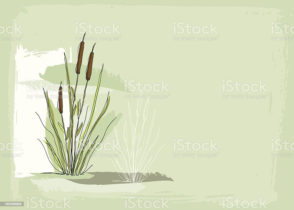 cattails background royalty-free cattails background stock vector art & more images of backgrounds