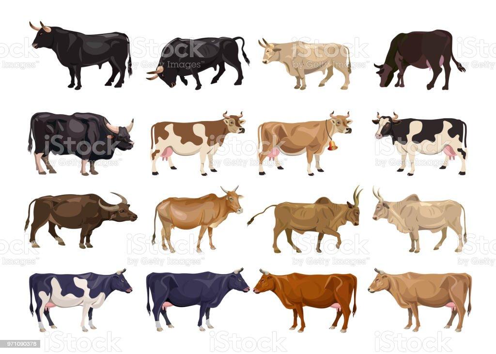 Cattle breeding set vector art illustration