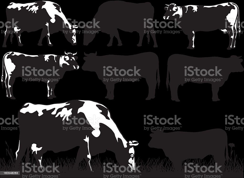 cattle - cow and bull vector art illustration