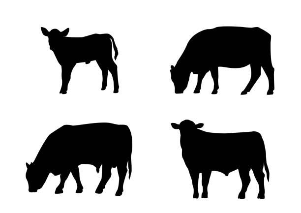 ilustrações de stock, clip art, desenhos animados e ícones de cattle silhouette bull cow calf standing grazing agriculture livestock - beef angus