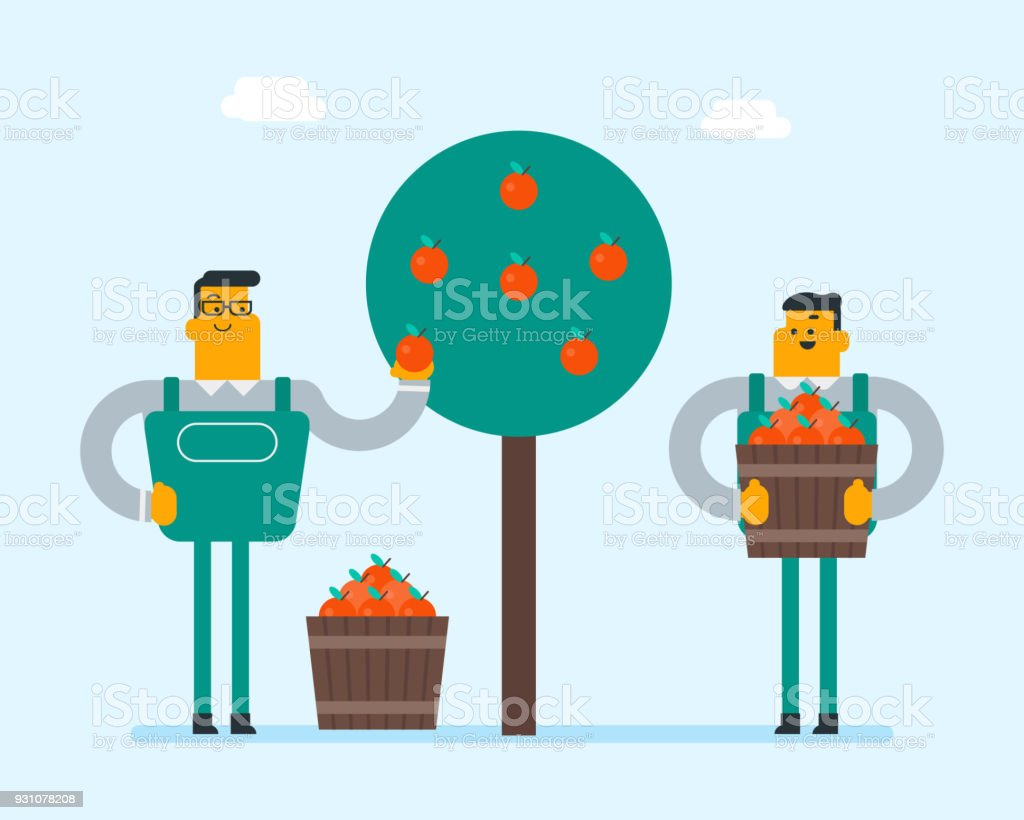 Caucasian farmers collecting apples in the garden vector art illustration