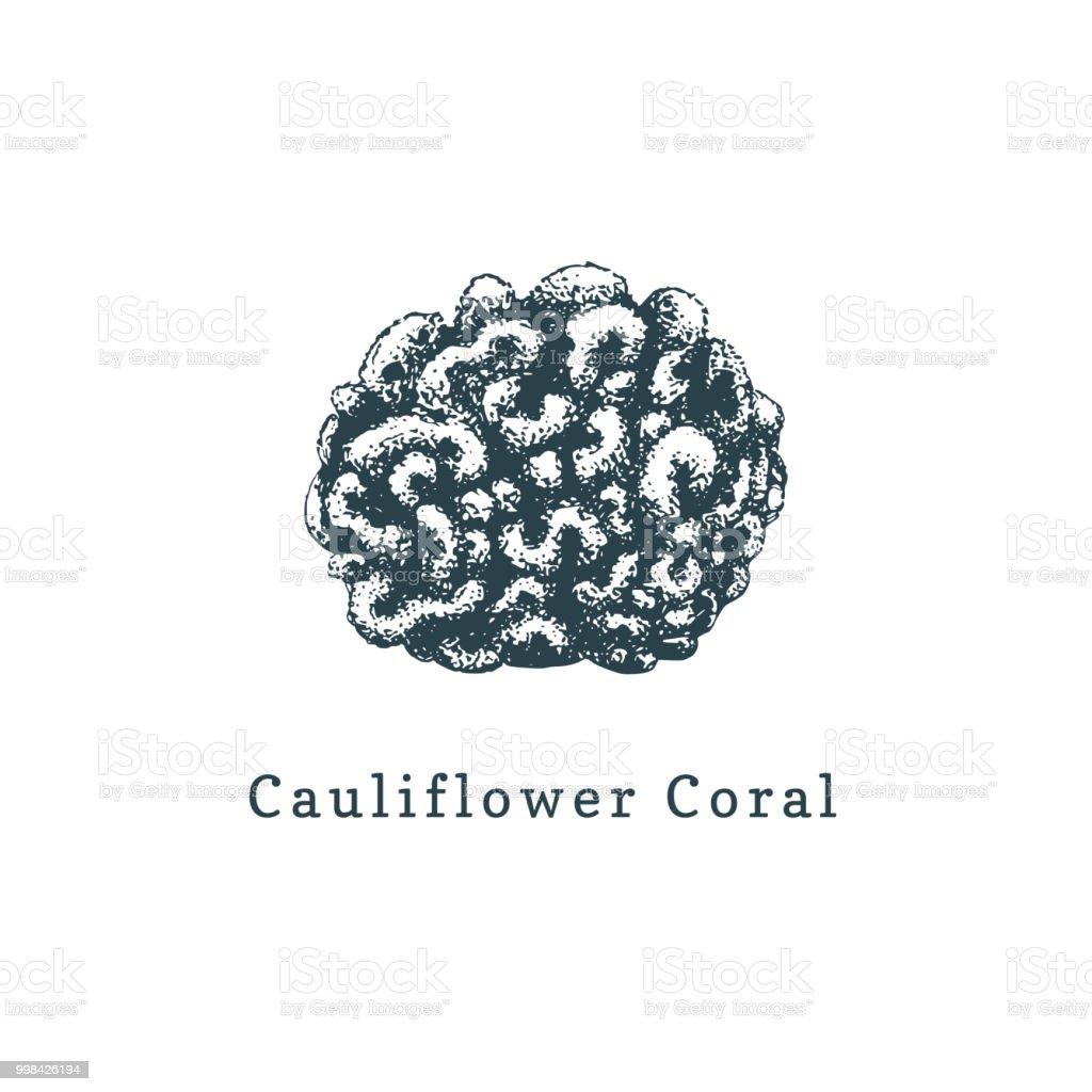 Ilustración de Ilustración De Vector Coral Coliflor Dibujo De Pólipo ...