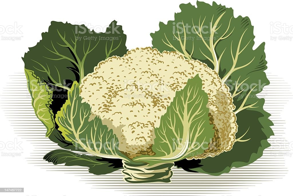 cauliflower vector art illustration
