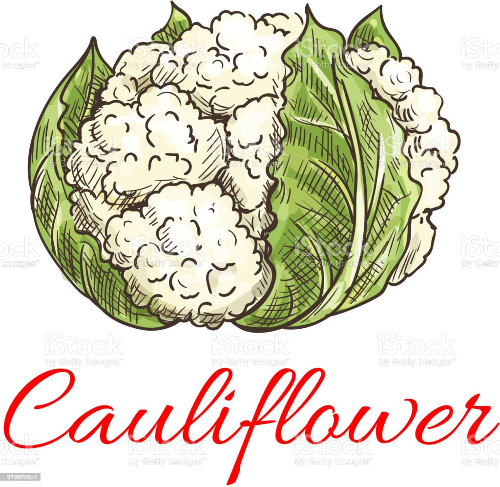 Cauliflower vegetable icon vector art illustration