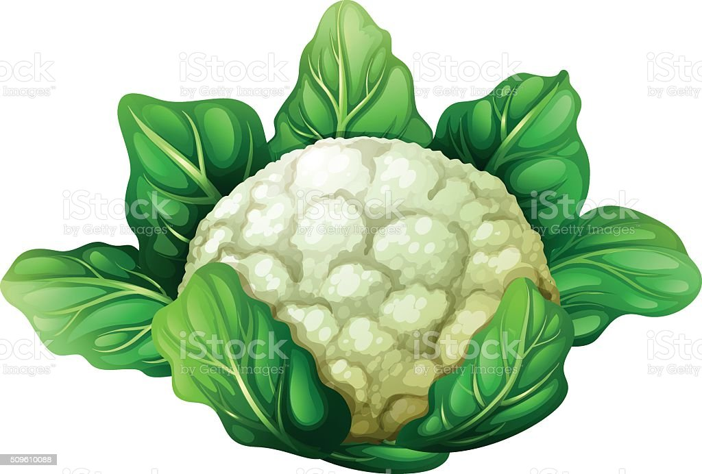 Cauliflower with green leaves vector art illustration