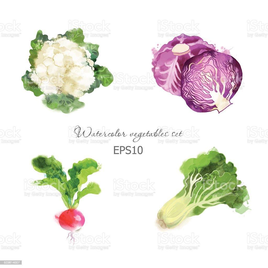 cauliflower,red cabbage, radish, lettuce vector art illustration