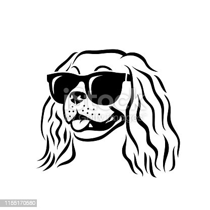 Cavalier King Charles Spaniel dog wearing sunglasses