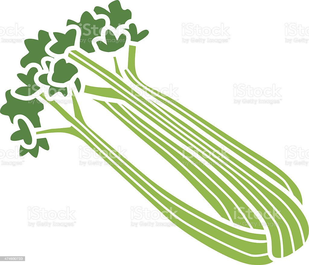 celery in color vector art illustration