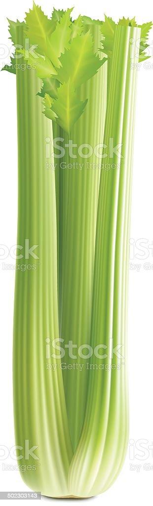 Celery vector art illustration