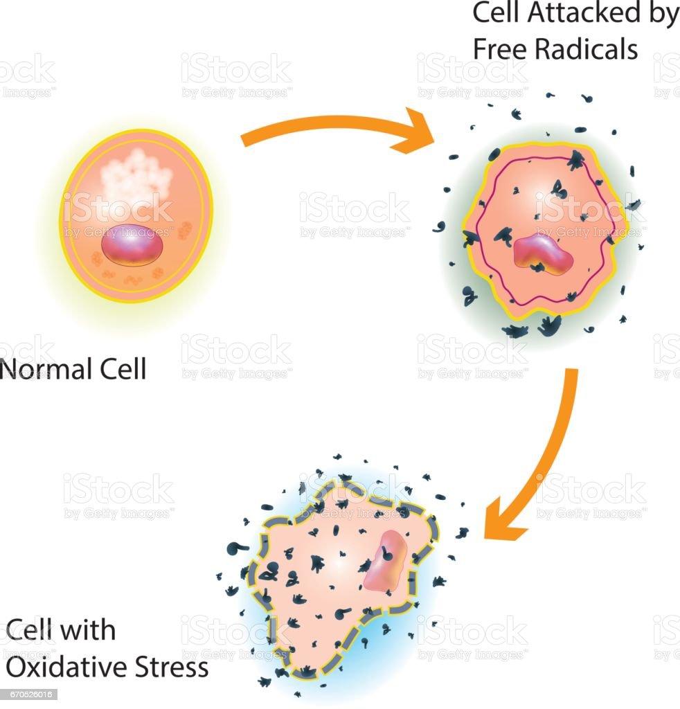 Cell Oxidative Stress vector art illustration