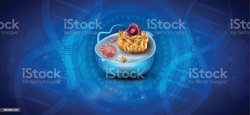 細胞結構 - 免版稅Centriole圖庫向量圖形