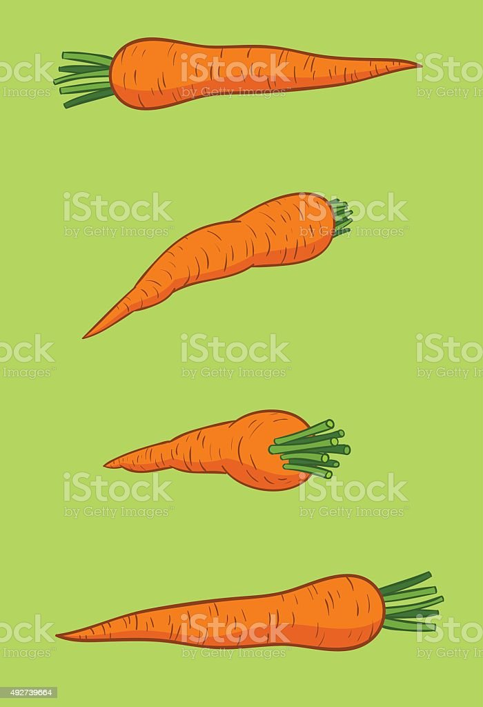 cenouras vector art illustration