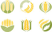 Cereal ears and grains set for agriculture industry or logo badge design vector food illustration organic natural wheat icon healthy bread agriculture label farming autumn product.
