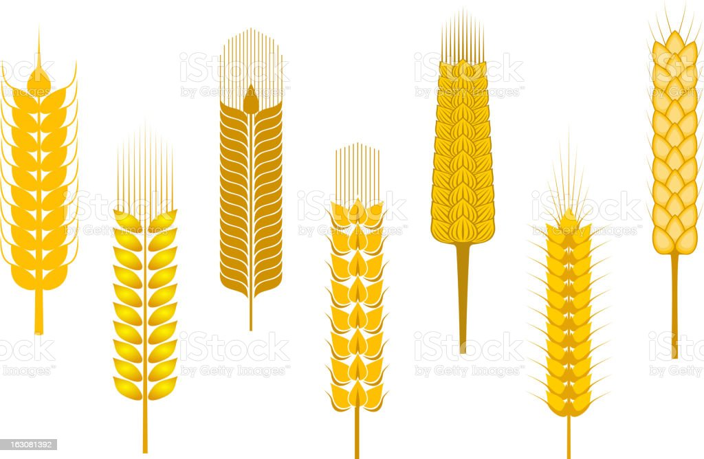 Cereal ears set royalty-free stock vector art