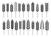 Cereal grain spikes icon shape set. Agriculture food logo symbol. Vector illustration image. Isolated on white background. Oat, whey, barley, rye.