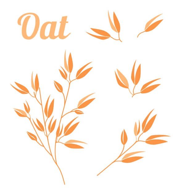 ilustrações de stock, clip art, desenhos animados e ícones de cereal plants, agriculture industry organic crop products for oat groats flakes, oatmeal packaging design. - oats