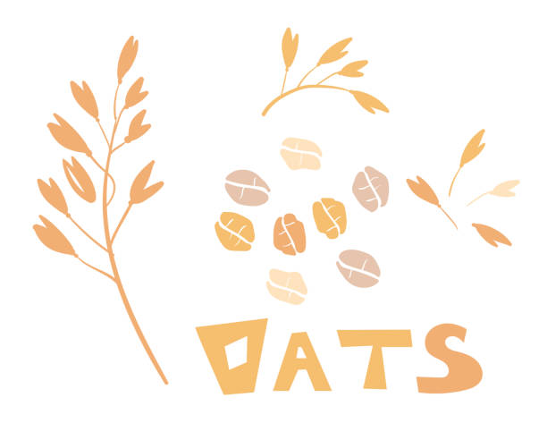 ilustrações de stock, clip art, desenhos animados e ícones de cereal plants, agriculture industry organic crop products for oat groats flakes, oatmeal packaging design. a handful of oats seed. template for banner, card, poster, print and other design projects. - aveia