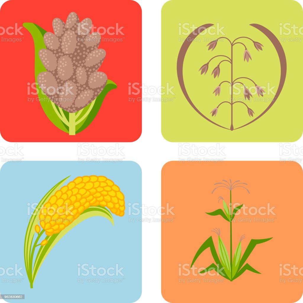5fa6dcd3359 Céréales graines grain produit insigne vector logo templates mis  illustration de farine végétal naturel muesli bouillie